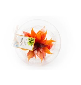 MadCandle Bougie Fleur Big Orange