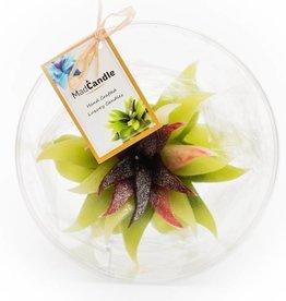 MadCandle Bloemenkaars groot groene thee