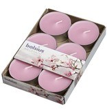Bolsius kaarsen Magnolia maxi fragrance tealight 8 hours