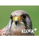 Houtplezier Valk - nest schommel