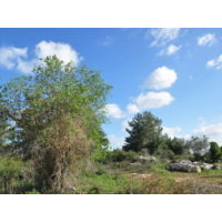 Rajuga Hasty Camo Kit Woodland