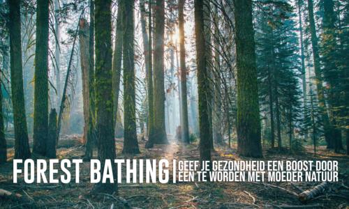 Forest Bathing: Geef je gezondheid een Boost door één te worden met moeder Natuur