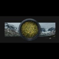 Shroom Tech Sport - 28 capsules