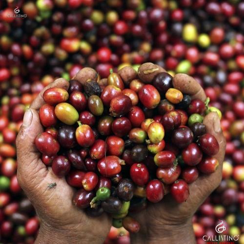 Callistino Koffie Costa Rica La Pantera Tarrazu