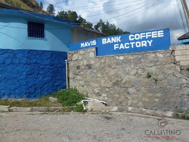 Callistino Koffie Jamaica Blue Mountain