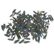 Wierookkruid - Lavendel