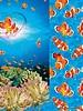 Nemo paneel - tricot