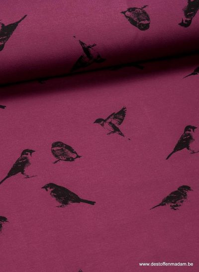 Chat Chocolat - sparrows - sweater
