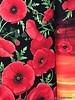 Timeless Treasures Fabrics poppy border cotton