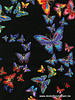 Timeless Treasures Fabrics butterfly black