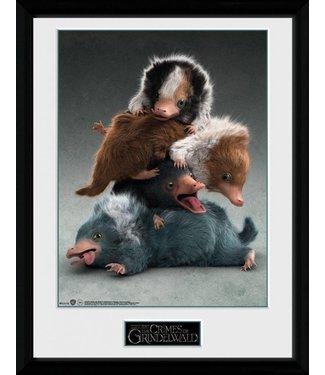 GB eye Fantastic Beasts | Nifflers Poster im Rahmen