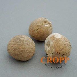 Betelnuss - 1 kg, ca 120 Nüsse