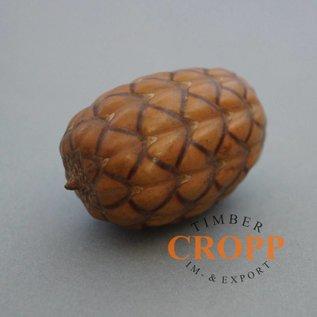 Uxi Amazonia Nut, 11Stk./Satz