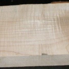 Sycamore fiddleback, Guitar-Body, 540 x 215 x 50 mm, 5,6 kg