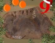 [9] Baumscheibe gemasert