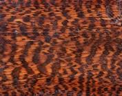 Schlangenholz, Snakewood, Letterwood