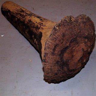 Grasbaum, ca. 580 x 290 x 100 mm, 8,2 kg