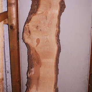 Ash Burl lumber on request