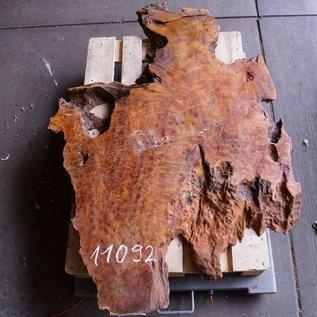 Kampfer Tischplatte, ca. 1500 x 950 x 75/60 mm, 52 kg, 11092