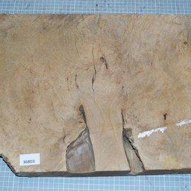 Lagerströmia Burl, approx. 540 x 360 x 50 mm, 6,5 kg