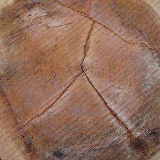 Bubinga Baumscheibe, Ø ca. 850 x 70 mm Stärke, 40527