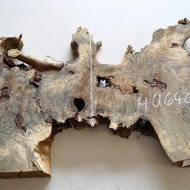 Buckeye burl slab, approx. 1380 x 280/380/510 x 52 mm, 10,9 kg