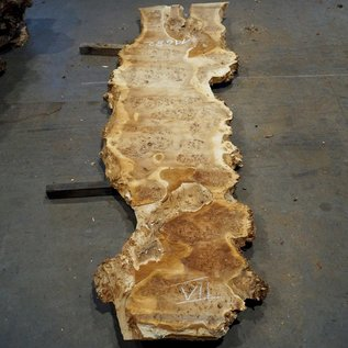 Mappa burl table top, approx. 3400 x 780 (1000) x 52 mm, 11682