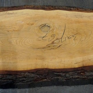 Libanon Zeder, Tischplatte, ca. 3000 x 670 x 80 mm, 11804