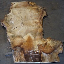 Mappa burl, table top, approx. 1900(2050) x 960(1600) x 80 mm, 11851