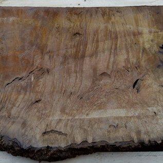 Laurel, burl slab, approx. 920 x 530 x 65 mm, 40552