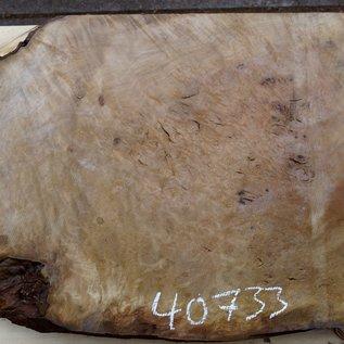 Laurel, burl slab, approx. 840 x 680 x 65 mm, 40733