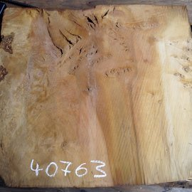 Laurel, burl slab, approx. 680 x 630 x 65 mm, 40763