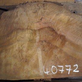 Laurel, burl slab, approx. 690 x 580 x 63 mm, 40772