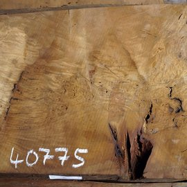 Laurel, burl slab, approx. 970 x 570 x 63 mm, 40775
