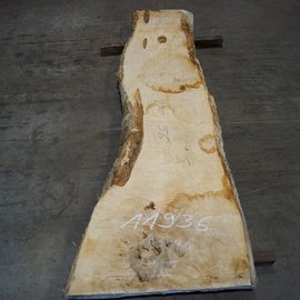 Ash burl, table top, approx. 2300 x 560 x 65 mm, 11936