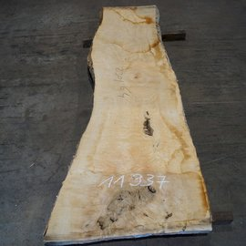Ash burl, table top, approx. 2300 x 640 x 65 mm, 11937