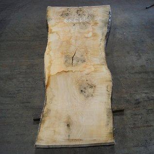 Esche Maser Tischplatte, ca. 2300 x 800 x 65 mm, 11939