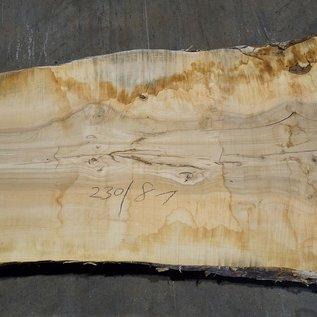Esche Maser Tischplatte, ca. 2300 x 810 x 65 mm, 11942