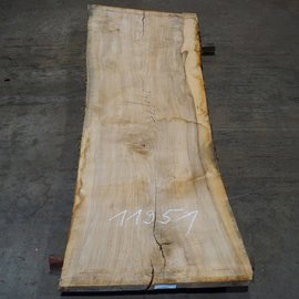 Olive Ash, table top, approx. 2400 x 780 x 65 mm, 11951