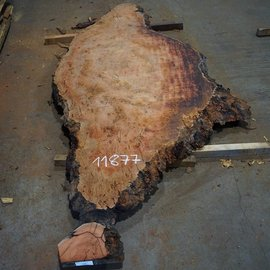 Eucalyptus burl, table top, approx. 2900 x 1220 x 52 mm, 11877