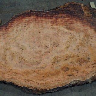 Eucalyptus burl, table top, approx. 2900 x 1370 x 52 mm, 11876