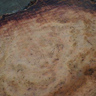 Eukalyptus Maser, Tischplatte, ca. 2900 x 1370 x 52 mm, 11876
