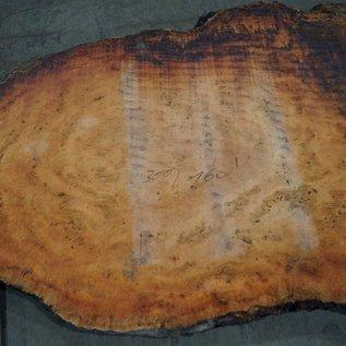 Eukalyptus Maser, Tischplatte, ca. 3000 x 1600 x 52 mm, 11874