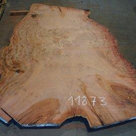 Eukalyptus Maser, Tischplatte, ca. 2800 x 1800 x 52 mm, 11873