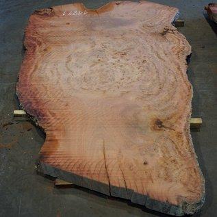 Eukalyptus Maser, Tischplatte, ca. 2900 x 1800 x 52 mm, 11871