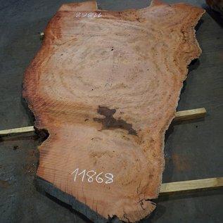 Eucalyptus burl, table top, approx. 2900 x 1750 x 52 mm, 11868
