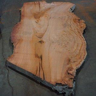 Eukalyptus Maser, Tischplatte, ca. 2700 x 1660 x 52 mm, 11860