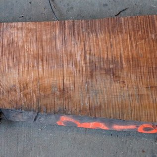 Redwood Maser, ca. 1450 x 410 x 45 mm, 60800