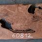 Redwood Maser, ca. 1040 x 500 x 45 mm, 60812