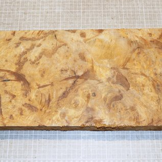 Golden Madrone burl approx. 430 x 210 x 38/41 mm, 3,0 kg